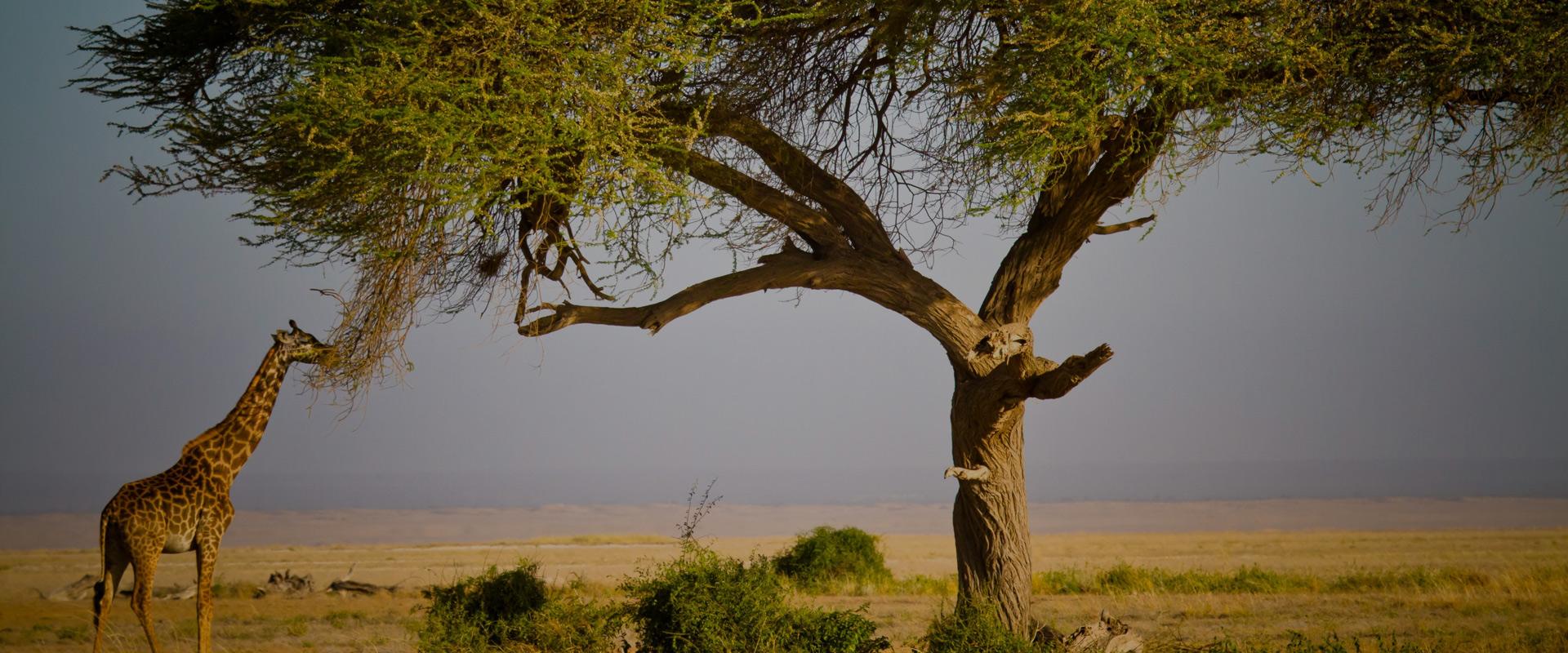 Face Of Africa Adventure